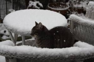 pluis in sneeuw