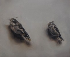 musjes van borremans